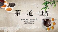 助力脱贫致富茶树认养活