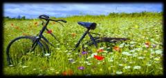2014-2016年自行车产业研究